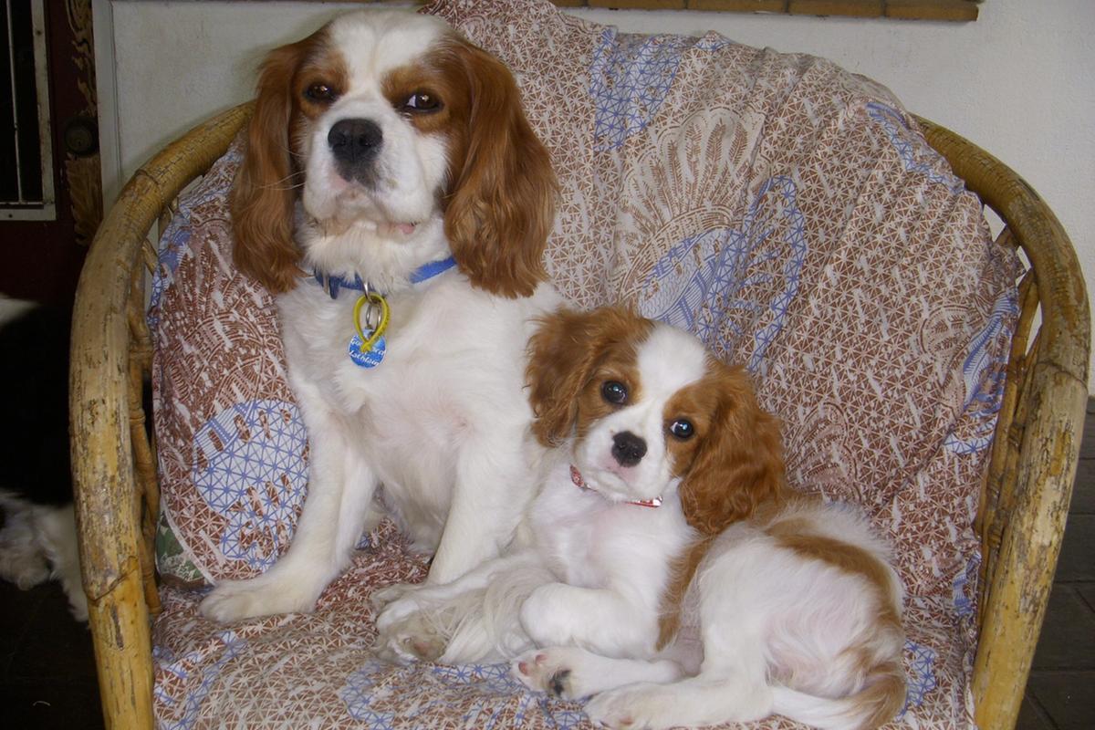 Coco & Proud Dad Milo